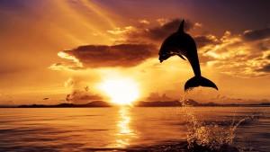 delfino-tramonto